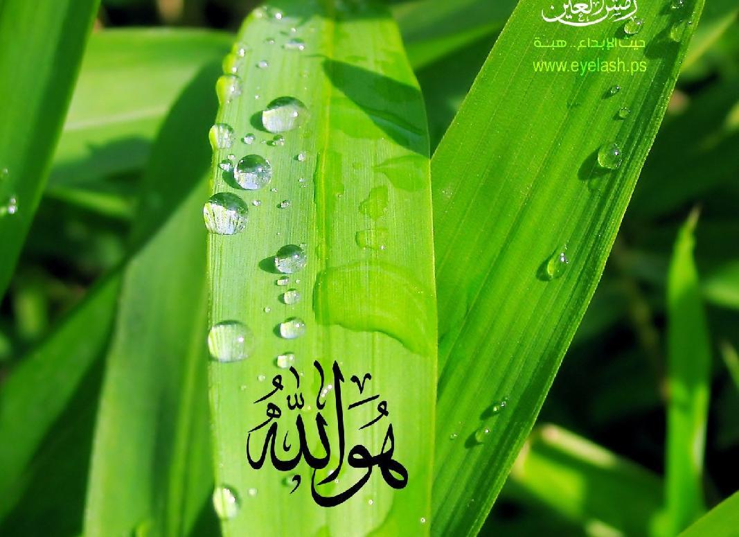 download tafsir al Quran juz 29 akhir dan3o
