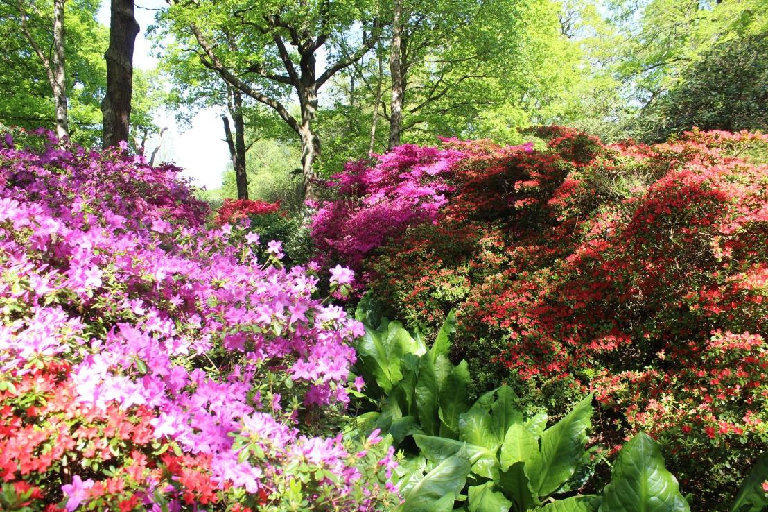 Mendaki Bukit Lewati Lembah di Richmond Park, Melihat Semak Bunga di Isabella Plantation, dan Main di PetershamPlayground